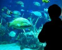 Person Looking bij Vissen in Aquarium royalty-vrije stock fotografie