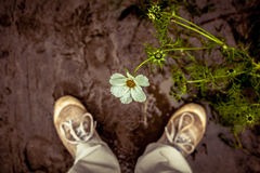 Person looking down at a flower Stock Image