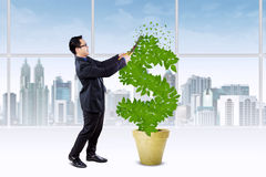 Person manage the growth of money tree Royalty Free Stock Image
