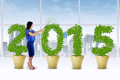 Person manage the trees growth Stock Image