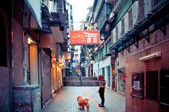 Person med hunden som går i Macao Arkivbild