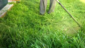Person mows high grass gasoline lawn mower, plants fly different directions. Person gardener working gasoline lawn mower, mows tall green grass, on a Sunny day stock footage