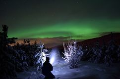 Person pointing flashlight beam towards aurora borealis on winter night sky in spruce tree field. Person pointing flashlight beam towards aurora borealis stock photo