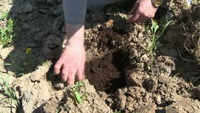 Person poring soil to hole in garden cropped view