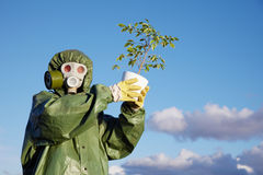 Person in protective clothes holds last ficus Stock Photos