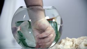 Person puts a hand into the aquarium stock footage