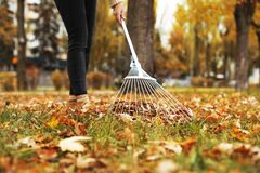 Person raking dry leaves outdoors on autumn day