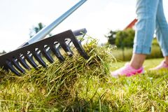 Person raking leaves. Raking leaves using rake. Person taking care of garden house yard grass. Agricultural, gardening equipment concept royalty free stock images