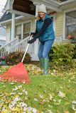 Person raking leaves. Woman raking leaves in front yeard of suburban home in Autumn royalty free stock photography