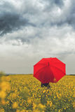 Person with Red Umbrella Standing in Oilseed Rapseed Agricultura Stock Photography