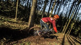 Person Riding on Bike Near Trees during Daytime Royalty Free Stock Photo