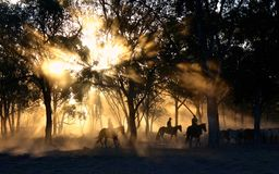 Person Riding on Horse Near Trees during Sunset Royalty Free Stock Images