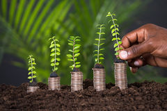 Person`s Hand Holding Small Plant Royalty Free Stock Photo
