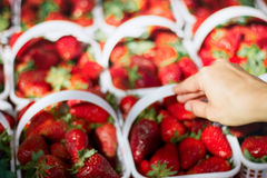 Person`s hand picking up strawberries in the basket. Outdoor market, berries in the basket, fresh strawberries, food, healthy food, healthy eating, red Royalty Free Stock Photography