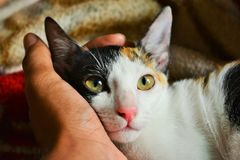 Person's Left Hand Holding Calico Cat Stock Photos