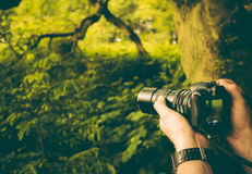 Person's Taking Photo of Green Plants in the Forest during Daytime Stock Photo