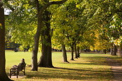 Person Sitting on Bench Near Tree Lines Stock Photos