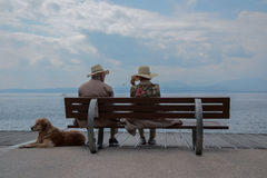 Person Sitting on a Brown Wooden Bench Near the Brown Short Coat Dog Near the Body of Water Royalty Free Stock Image