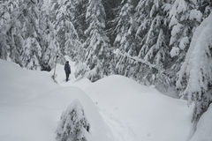Snowshoer on Cypress Mountain Stock Image