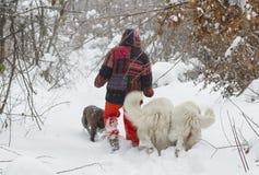 Person som går med hundkapplöpning i vinterskog royaltyfri foto