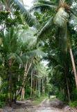 Person som går ner en djungelväg, Santa Ana Island, Solomon Islands royaltyfria foton
