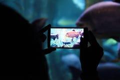 Person som rymmer en mobil som tar en bild i ett akvarium under ett kulturellt lopp royaltyfri bild