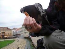 Person som spelar med fåglar fotografering för bildbyråer