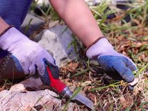 Person springtime gardening. A person removing weeds from a flower bed. Closeup of gloved hands Royalty Free Stock Photos