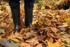 Person standing among the autumn foliage Royalty Free Stock Image