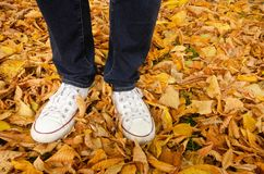 Feet standing on Autumn leaves royalty free stock image