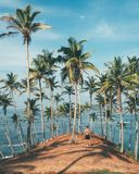 Person Standing on Dirt Surrounded by Coconut Trees Stock Photography