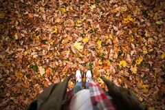 Person Standing on a Ground With Dry Leaves Royalty Free Stock Photos