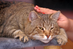 Person stroking cat Stock Image