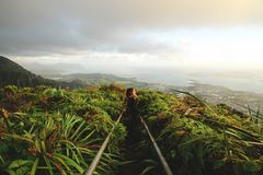 Person Surrounded by Green Leaved Plants Near Mountains Under White Cloudy Sky Stock Photography