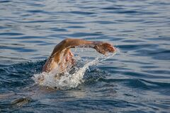 Person Swimming on Body of Water Doing Freestyle Strokes Stock Photos