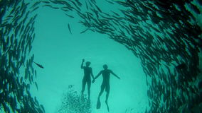 Person swimming among shoal of jack fish in tulemben in Bali, Indonesia stock video