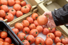 Person takes tomato Stock Images