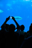 Person taking a photograph to the fishes in aquarium. Royalty Free Stock Photos
