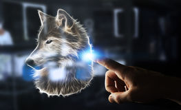 Person touching fractal endangered wolf illustration 3D renderin. Person touching with his finger fractal endangered wolf illustration 3D rendering Royalty Free Stock Image