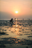 Person in traditional Thai hat is collecting crabs at sunset Stock Image