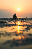 Person in traditional Thai hat is collecting crabs at sunset Stock Photography