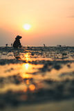 Person in traditional Thai hat is collecting crabs at sunset Royalty Free Stock Photos