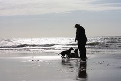 A person with two dogs on a glimmering sandy beach in sunshine Royalty Free Stock Photography