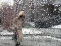 Person under rain. By spring Stock Photography