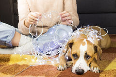 Person unwinds christmas lights with puppy Stock Photo