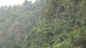 Person Using Zip Line in Forest stock video footage