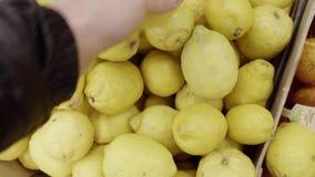 Person wählt die großen Zitronen aus, die in Holzkiste auf einen lokalen Landwirtmarkt gebracht werden, stock footage