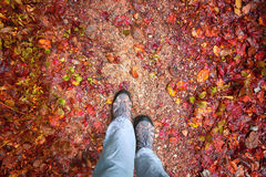 Person walking on the autumn forest path Royalty Free Stock Photos