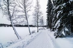 A person walking in a snow covered forest next to a frozen lake. A person walking in a forest covered of snow. A road next to a frozen lake Royalty Free Stock Image