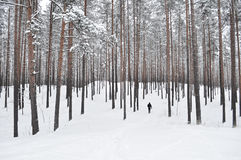 Person Walking on Forest Filled With Snow Stock Image